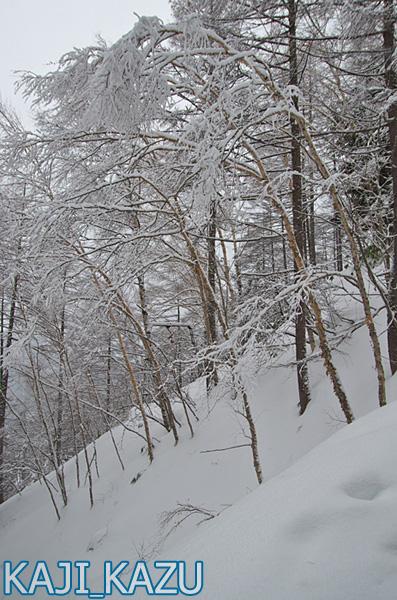 登山口すぐの雪景色