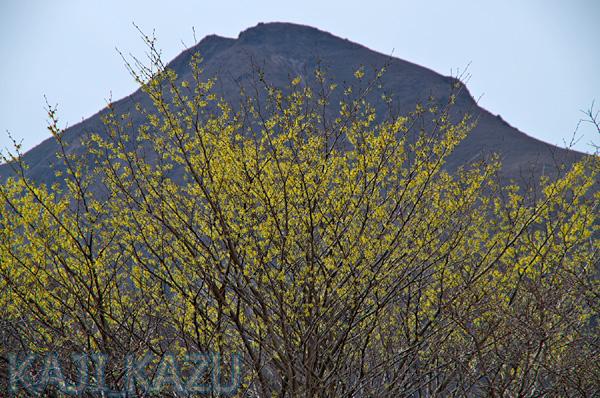 白口岳とマンサク