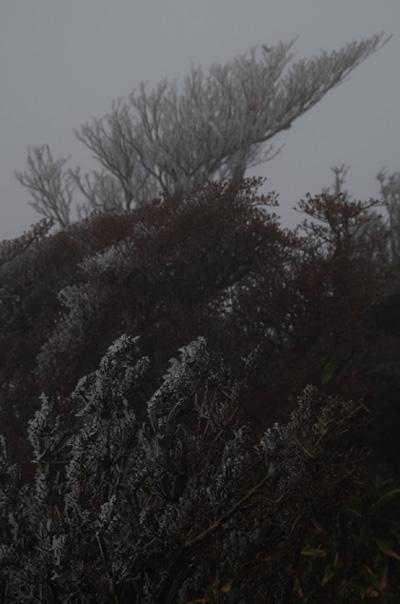 天狗岩周辺は霧氷が!