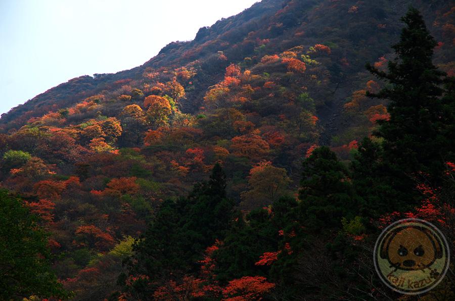 三俣山中腹の紅葉