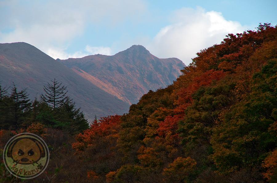 紅葉ごしの大船山