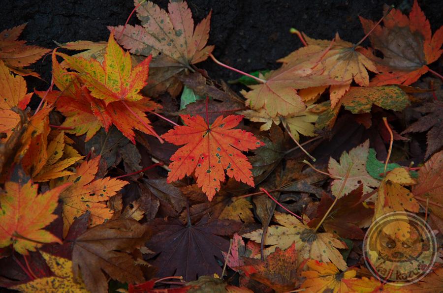 綺麗な落ち葉
