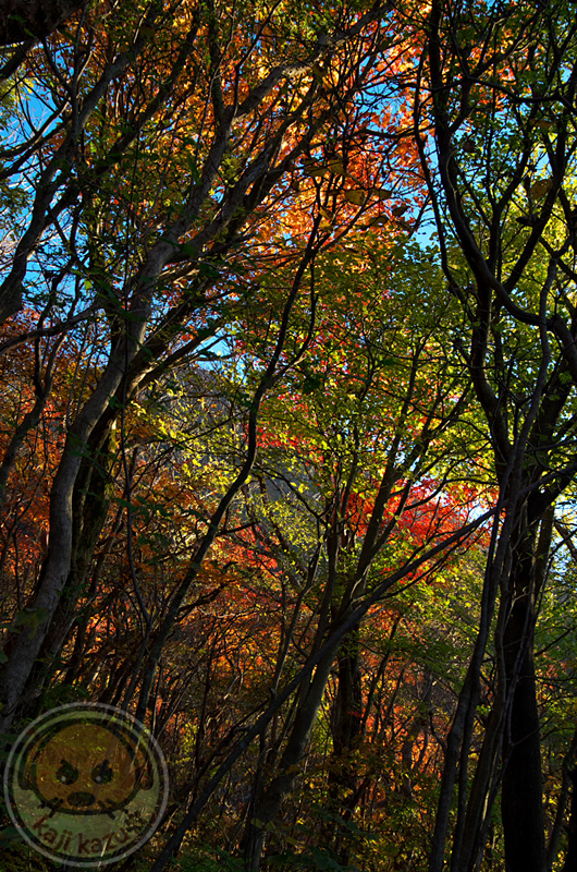 登路の紅葉